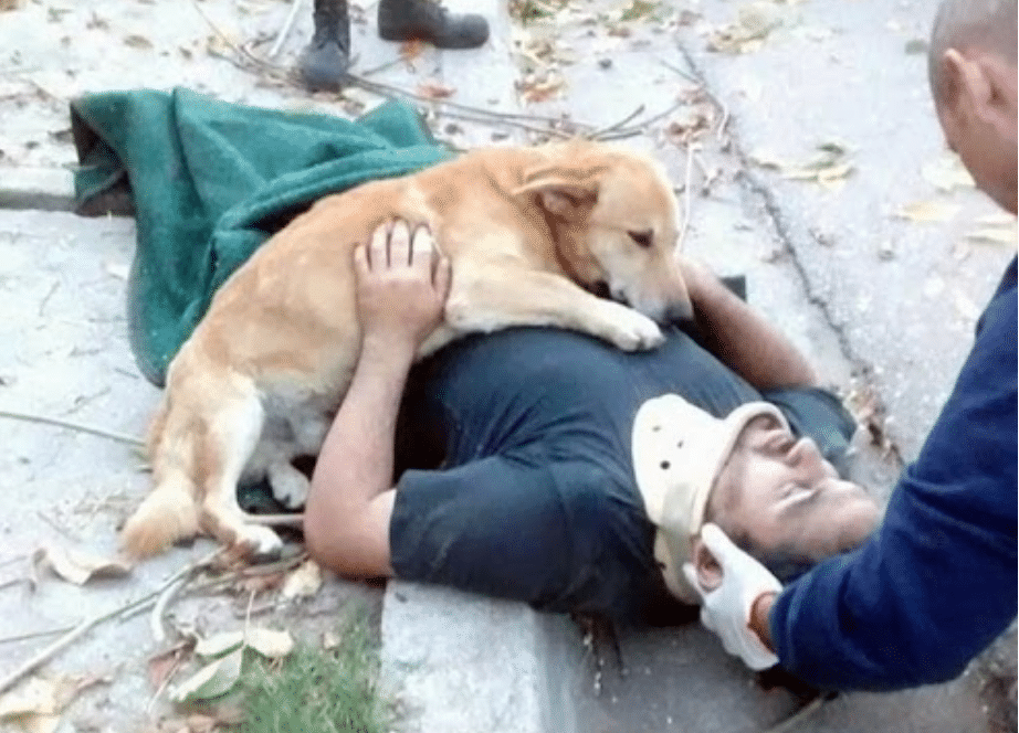 16 Sweet And Heartwarming Images Of Dogs That Demonstrate